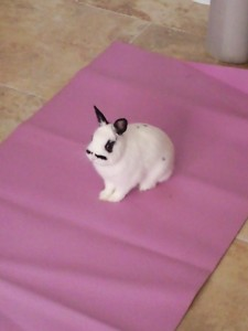 Pâques ! dans Pâques photo0264-225x300
